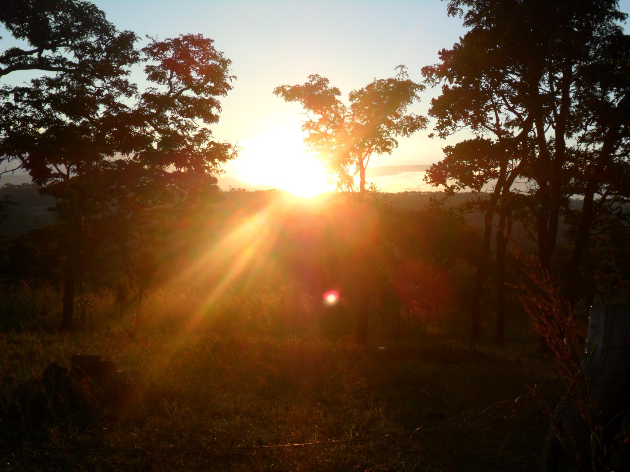 Sun through trees at Chandame